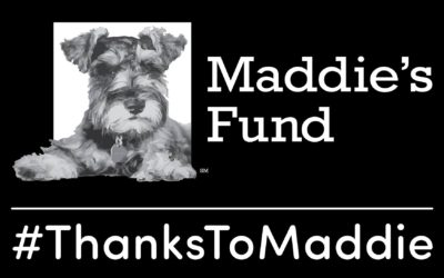 Conference Scholarships Provided By Maddie's Fund