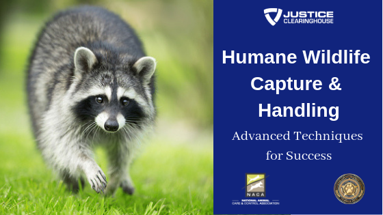 Humane Wildlife Capture & Handling: Advanced Techniques for Success