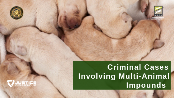 Criminal Cases Involving Multi-Animal Impounds