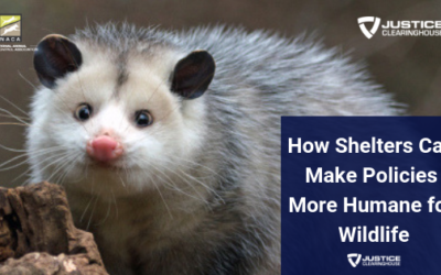 How Shelters Can Make Policies More Humane for Wildlife