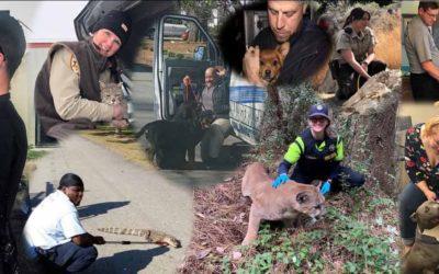Animal Care and Control Appreciation Week