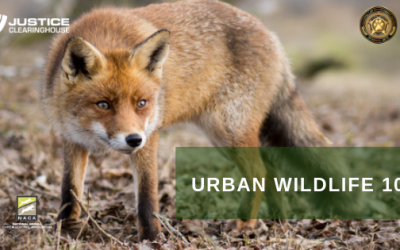 Urban Wildlife 101