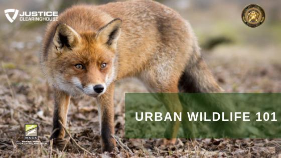 Urban Wildlife 101