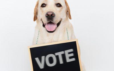 2019 NACA Board of Directors Elections – Voting Now Open