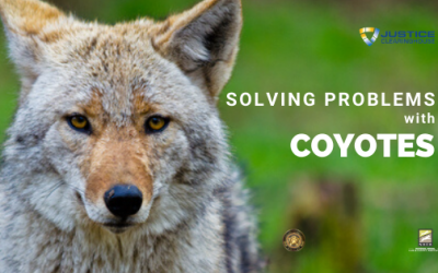 Solving Problems with Coyotes